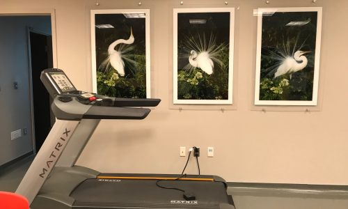 Inpatient Unit Treadmill